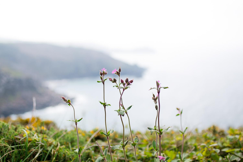 Klippen Cornwall