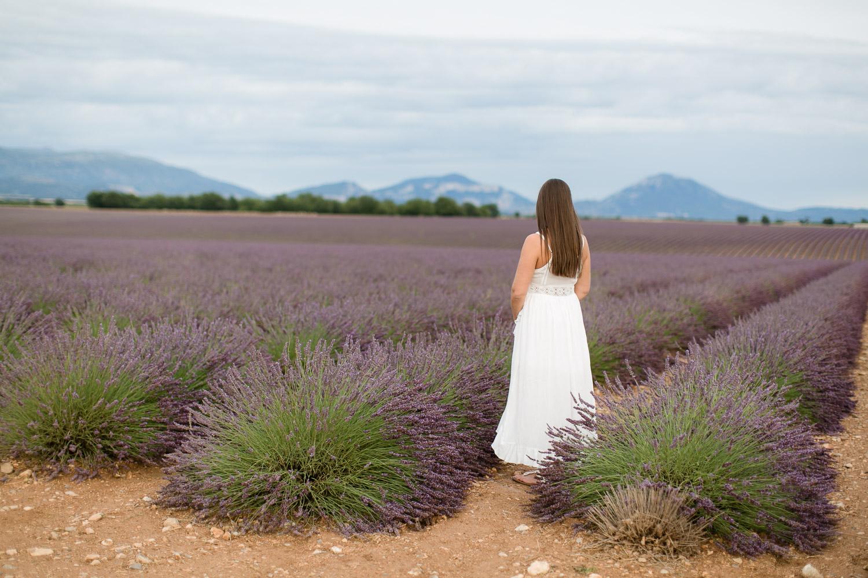 Provence Lavendelfelder in Valensole